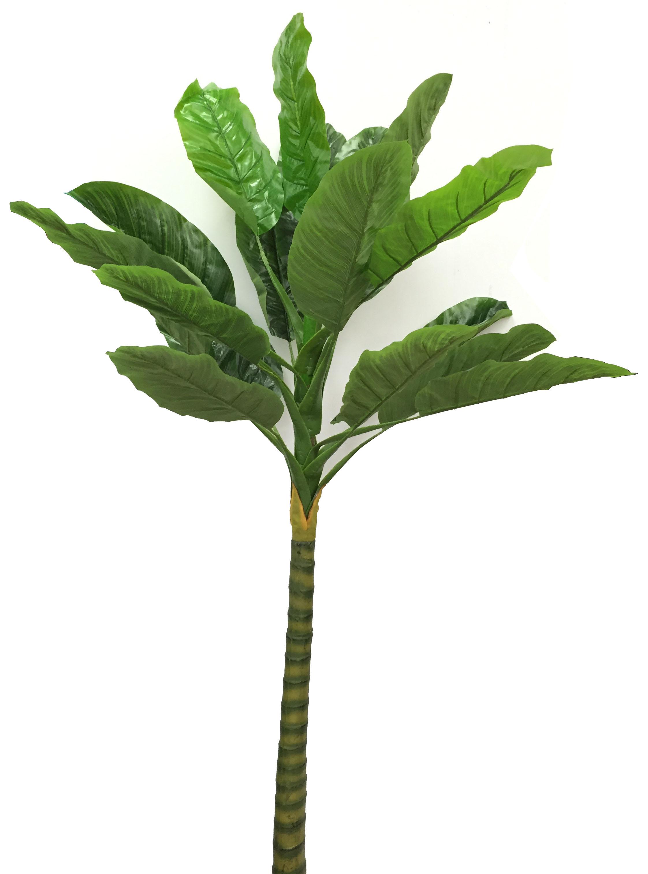 Banana Palm Prime Liquidations
