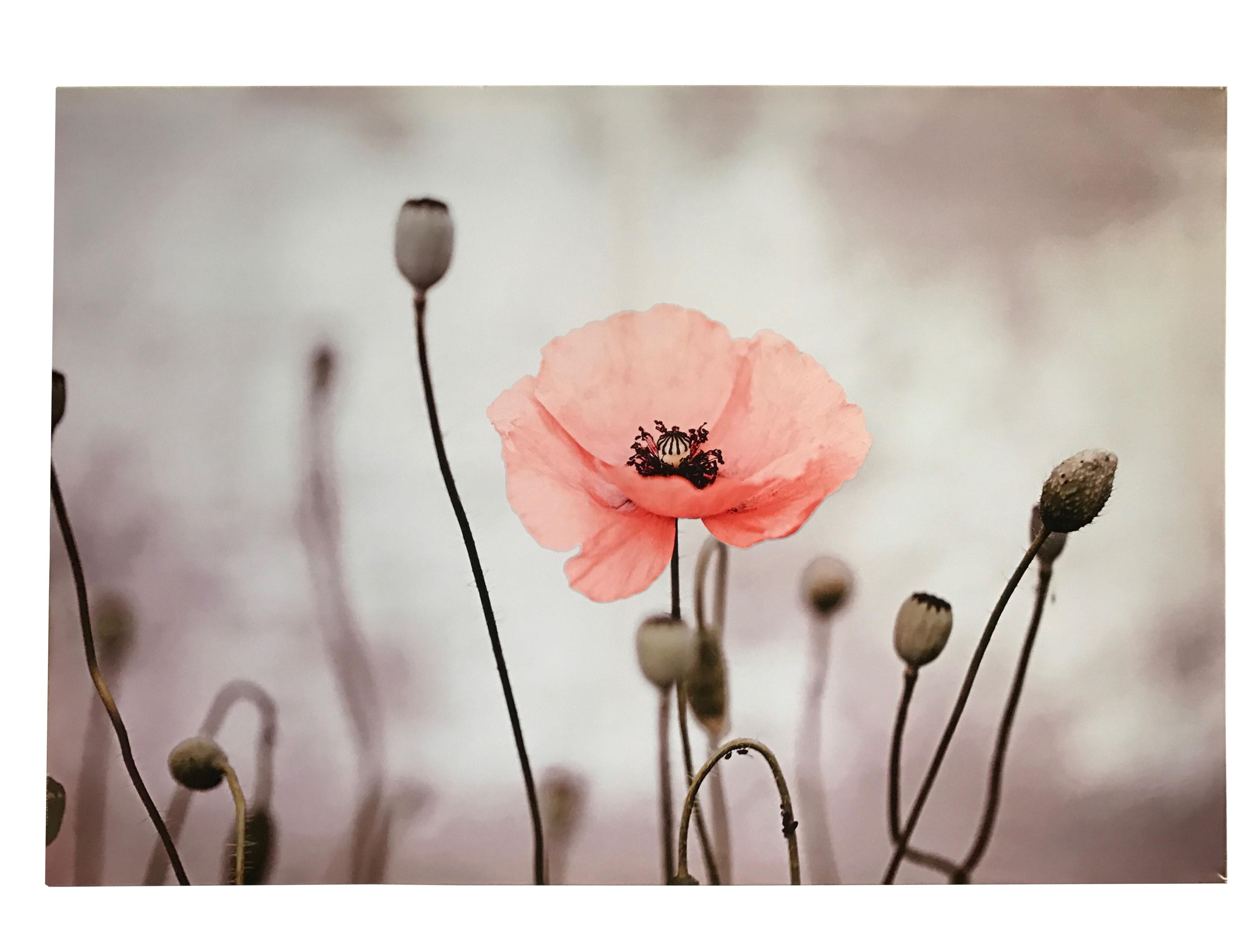 Print Poppy - 90x60